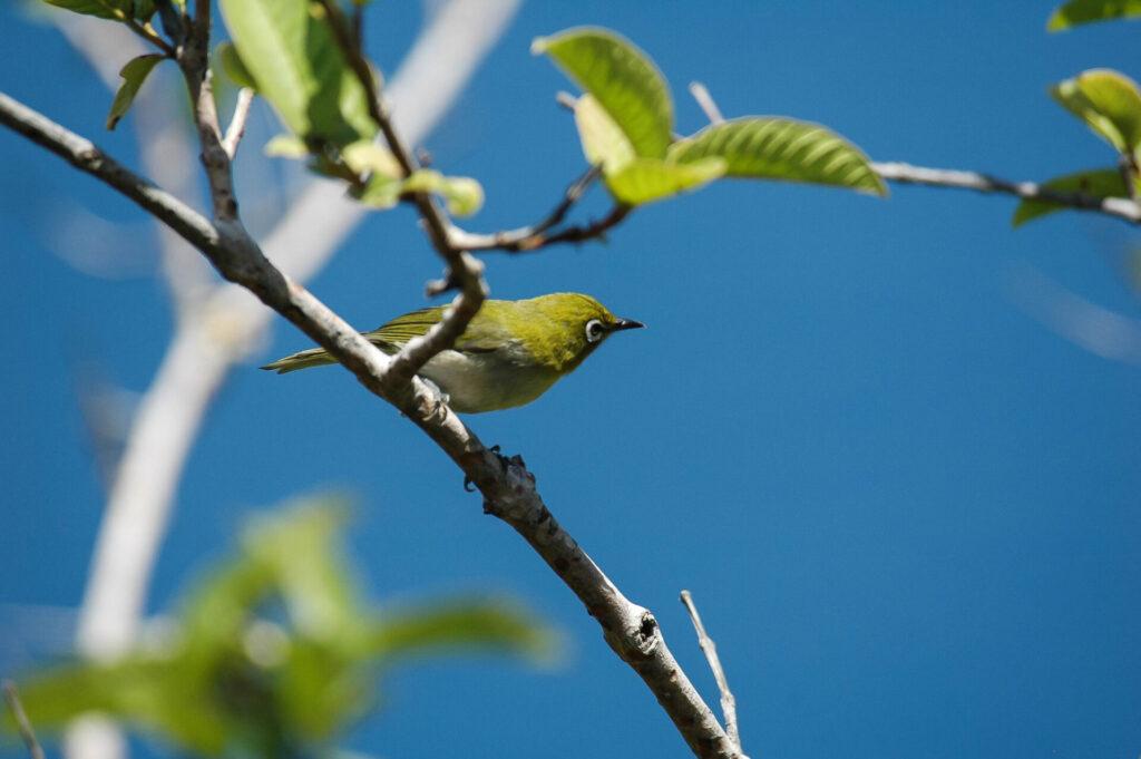 コナの街で出会える鳥たちPart1 プロローグ(序章)