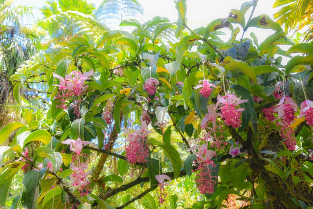 熱帯植物好きにオススメな場所Part2★ハワイトロピカルバイオリザーブガーデン前編