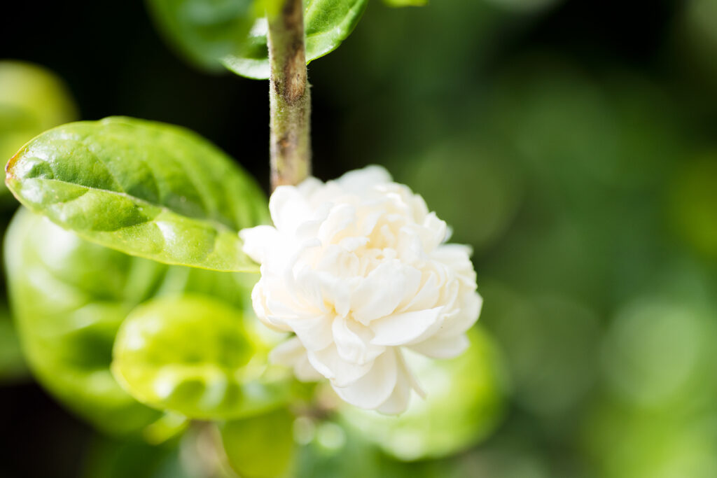 カラオアガーデンのお花たち