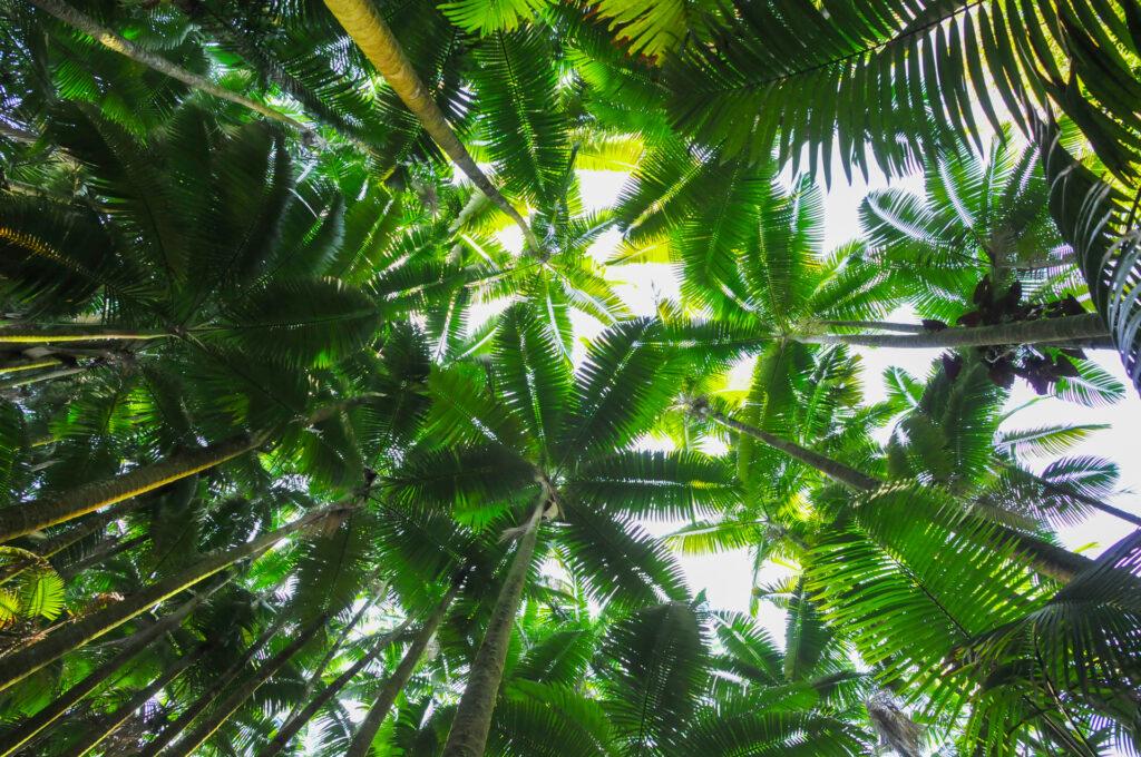 熱帯植物好きにオススメな場所Part2★ハワイトロピカルバイオリザーブガーデン・ファーンフォレスト編